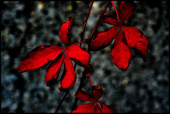 Red Leafs (wide-angle.de) Tags: flowers digital germany de top500 y201212 y201212flowerstop500