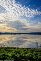 Beauty in the Flooding (NormFox) Tags: california clouds farm field flood gilroy grass landscape outdoor sky water