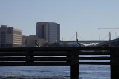 Tweet, tweet (bMi2fotografx) Tags: architecture bumper channel fly rest happy florida jacksonville saintjohns river clouds blue water downtown birds