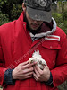 Young farmer with a chick, UK 2013 (ontourwithdaisy.co.uk) Tags: uk red england baby man bird chicken vertical holding europe cornwall britain great young chick cap overalls worker farmer youngadult youngman hold 20s 2029 twenties handling 20years 2024 2429