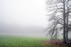 trees in the fog with copy space (Mimadeo) Tags: morning light wallpaper mist tree green nature wet grass misty fog landscape haze branch bright background space branches foggy highkey trunks copyspace copy minimalist