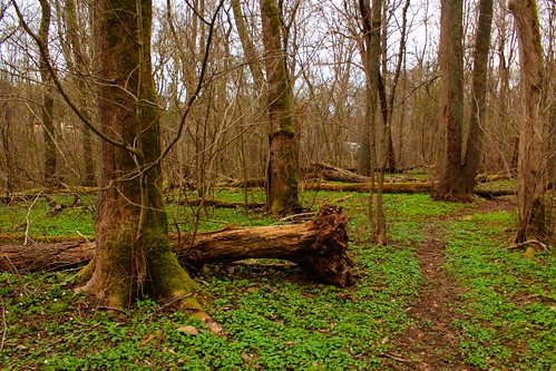 Fallen tree by nahid-v, on Flickr
