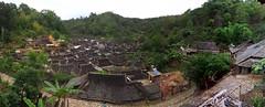 Yunnan2013-Day4-20130604_114730 (172) (Wan Ling Tea House) Tags: china tea yunnan chinesetea teatree puerh puerhtea puer puertea