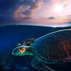 Sea color by Vitaliy Sokol (snosons) Tags: ocean life travel blue red sea wild sun fish color green beach sports nature water beautiful beauty animal coral closeup swimming swim outdoors one hawaii big marine colorful underwater natural turtle reptile background wildlife indian philippines extreme bottom dive egypt scuba snorkeling exotic tropical caribbean diver aquatic reef undersea