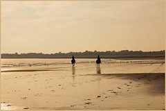 GOING HOME (henrhyde (gill)) Tags: sea seagulls heritage beach wales coast sand sony riding ponies newton porthcawl