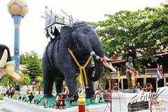 ช้างศึก เจ้าพระยาปราบหงสา สมเด็จพระนเรศวรมหาราช (ก้านกล้วยตัวจริง)