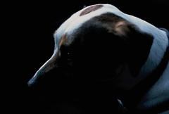 thoughts of walk (bigalid) Tags: summer dog dark cumbria e6 carlisle stanwix agfaprecisact100 2013 nikkormatel