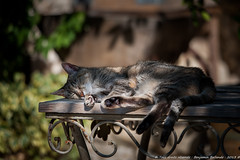 Cat's very hard life ! ^^ (Benjamin Ballande) Tags: life cats very hard