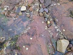 Texture of nature 4 (tumpshy) Tags: summer seaweed beach scotland seaside rocks pebbles algae miscellaneous dunbar seashore rockpool limpets eastlothian eastbeach 2013 seagulldroppings textureofnature tumpshy