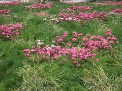 PARTERRE DE FLEURS (marsupilami92) Tags: paris france fleur frankreich ledefrance 75 manifestation grve lamadeleine syndicat 8emearrondissement