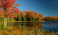 Pure Northwoods Autumn (Windows to Nature) Tags: