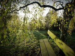 Bench in autumn garden (april-mo) Tags: autumn bench autumnleaves birch banc birchtree
