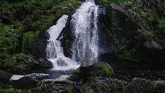 Triberg Waterfalls IV (Linus Wärn) Tags: germany waterfall schwarzwald blackforest treestump triberg badenwürttemberg gutachriver