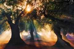 S a l e n t o's L i g h t (pgpaulagonzalez) Tags: sunset sun alberi sunrise relax tramonto alba olive campagna pace sole nebbia albero colori viaggio salento vacanza lecce controluce raggi bosco fumo oliveto foresta ricordo 500px ifttt