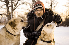 Snow noses (Lispeltuut) Tags: schnee snow canada dogs daniel manitoba tucker amerika neele hunde grunthal theworldwelivein supershot schneenasen snownoses