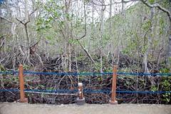Damaged Mangroves (machanon) Tags: trees island resort mangrove coron typhoon haiyan yolanda palawan busuanga elrioymar