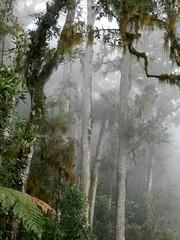 DSCN5961 (adamcmarshall) Tags: cloud mountain adam digital forest photography photo san montana image photos selva picture pic images hike marshall trail cerro photograph montaa sendero gerardo chirripo chirrip adammarshall chirip