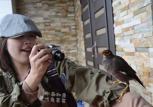 水鳥印象028.jpg