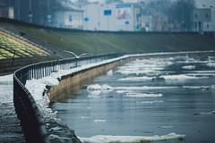 Drift Ice #38/365 (A. Aleksandravičius) Tags: winter bird ice oneaday canon photoaday 365 70200 drift pictureaday floe 70200mm markiii project365 365days 2013 38365 canoneos5dmarkiii 3652013