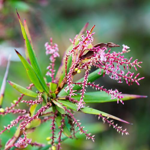 Flower  near Pemperton, WA.