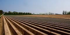 Lines / Lijnen (jo.misere) Tags: brown nature lines linen natuur fields klei bruin voeren velden landbouw