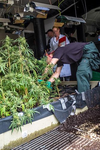 2015-07-03 Hanfplantage in ehemaliger Sportsbar entdeckt
