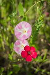 Série Fleur 2015 - 7 (Macsous) Tags: alpes lyon fleur fleurs flower flowers gazon herbe herbes japonais jardin jaune mauvaise rhone solaize tige verdoyant vert