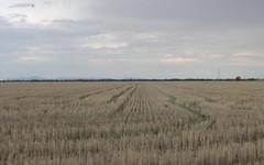 - 'Argyle' & 'Melba Downs, Quandialla NSW