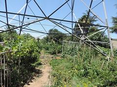 Community garden grows under Western transmission line (Western Area Power Admin) Tags: california environment sacramento sierranevada goodneighbors transmissionlines sacramentomunicipalutilitydistrict westernareapoweradministration