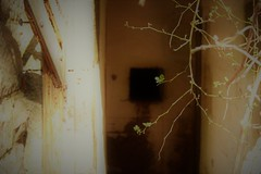 (taradonnelly1) Tags: outdoor statenisland fortwadsworth creepy