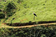 O gavião (luizleitefotografia) Tags: brilho luz vermelho azul branco mato plantas galhos grama verde folhas céu montanha serra campo terra horizonte dia pernas asas bico unhas garras olhos sãopaulo brasil