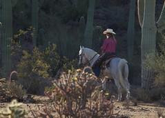 WSR Morning Rider 41 (blackhawk32) Tags: ranch horses horse cowboy western rodeo white whitestallionranch ranch dude