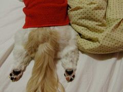 Bundinha! (Barbara_Filippini) Tags: dog dogs shihtzu perro cachorro ces perros cachorros inu tibetcute