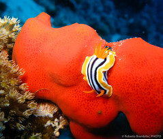 Sharm 496-493.jpg (Brambo1969) Tags: sub sharmelsheikh vacanze 2007 mre subacquea marrosso