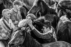 031 (Angel T.) Tags: horse white black color blanco caballo spain negro galicia estrada tradition pontevedra tradicion rapa sabucedo bestas