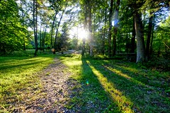 Exiting Ted Black Woods (biosynthesis24) Tags: park trees usa green nature forest fun midwest scenery hiking michigan trails sunsets fungi paths meridian tbw ecstatic okemos meridiantownship tedblackwoods