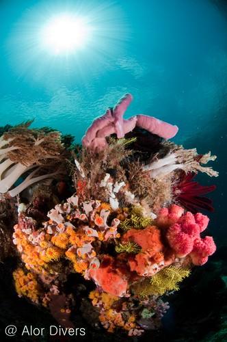 coral & Sun pantar island