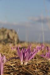 Spain 2013 (Thanks for reaching 200.000 views!) Tags: mountains nature spain natur natuur espana bergen spanje naturephotography natuurfotografie canon60d parquenaturalhayedodetejeranegra