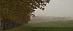 mist (Anny Turolla) Tags: autumn trees misty fog alberi nikon hills nebbia autunno colline yellowleaves landascape rivergaro valtrebbia vialealberato veano nikond300s annyturolla