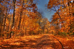 Bike trail at the park in the Fall. (Anton Shomali - Thank you for over 1 million views) Tags: road park autumn trees shadow sky sun chicago fall nature colors leaves bike fantastic colours superb fallcolors bluesky autumnleaves autumncolors fallfoliage trail walkway beautifulcolors simply fallenleaves fallcolours biketrail coth supershot topshots beautifulphoto fantasticnature simplysuperb worldwidelandscapes natureselegantshots alittlebeauty coth5 theoriginalgoldseal flickrsportal magicmomentsinyourlifelevel2 onlythebestofflickr nature'splus biketrailattheparkinthefall