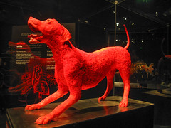 Dog vascular system (pianoforte) Tags: dallas anatomy biology specimens plastination dallastx comparativeanatomy comparativezoology perotmuseum perotmuseumofnatureandscience animalinsideout