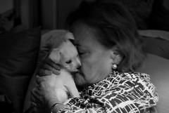 El olor del amor (Carlos A. Aviles) Tags: dog pet love amigo friend amor perro chester mascota