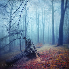 silent sadness (Dyrk.Wyst) Tags: autumn trees light nature wet leaves fog forest landscape licht mood glow nebel path branches laub herbst natur roots silhouettes atmosphere foliage wuppertal ste landschaft wald bume bergischesland atmosphre dull stimmung uprooted humid weg verlassen wurzeln leuchten feucht baumstumpf entwurzelt abhang magicunicornmasterpiece