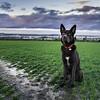 Jones Landscape (Ryan O'Donoghue) Tags: landscape photography landscapes husky essex lightroom gravesend huskador flickr12days