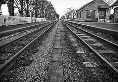 Between the Lines (manxmaid2000) Tags: railroad blackandwhite heritage monochrome lines station mono vanishingpoint track outdoor platform rail railway steam line rails isleofman manx sleeper iom sleepers