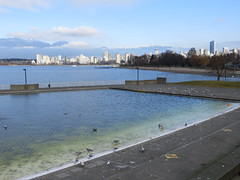 Occupying Kits Pool (misiekmintus) Tags: ocean winter sea sky canada bird nature water pool birds vancouver america swimming bc view skyscrapers pacific natur swimmingpool kits kitsilano pacificnorthwest occupy seeninvancouver insidevancouver