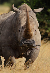 Is there a problem? (Rainbirder) Tags: kenya whiterhinoceros ceratotheriumsimum solioranch grassrhinoceros rainbirder