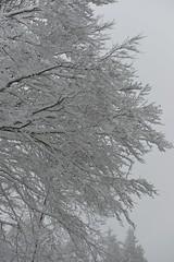 Hiver sur l'Aigoual (Michel Seguret Thanks all for 8.700 000 views) Tags: schnee winter white mountain snow france cold blanco berg forest montagne season nikon hiver selva neve invierno neige montaa kalt blanc froid frio fort gard d800 saison weis inverna michelseguret