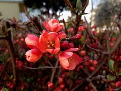 Flower ;) (kalboy92) Tags: flowers flower spring kwiaty wiosna kwiat uploaded:by=flickrmobile flickriosapp:filter=nofilter warpspzoooddziałwkaliszu