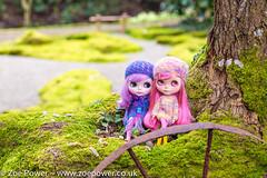Blythes in the Japaense Garden